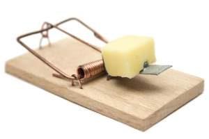 Como eliminar plaga de ratones en casa