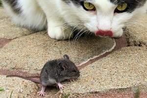 C mo exterminar ratones en el hogar remedios trampas venenos - Como eliminar ratones en el hogar ...