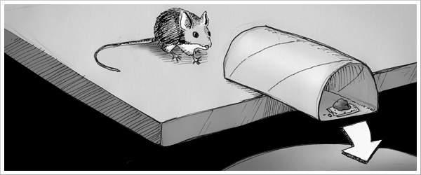 Como hacer trampas para ratones con rollo de papel y recipiente