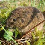 Como eliminar ratas en el jardín: acabar con los ratones del jardín