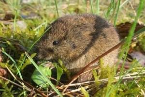 Como eliminar ratas en el jard n acabar con los ratones for Ahuyentar ratas jardin