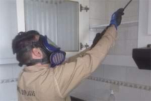 Cómo matar una rata grande en casa: fumigación