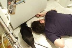 C mo terminar con las ratas en casa remedios venenos - Como eliminar ratas en casa ...