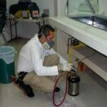 Qu veneno es bueno para matar ratones efectivos - Como eliminar ratas en casa ...