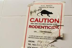 Productos para matar ratas y ratones