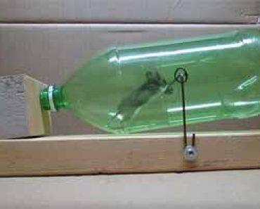 Trampa para ratas archivos como eliminar ratas de casa - Como eliminar ratas en casa ...