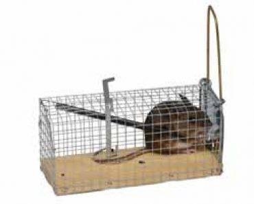 Trampa para ratas archivos como eliminar ratas de casa - Como acabar con las ratas en mi casa ...