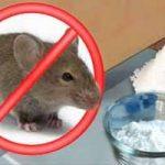 Cómo acabar con los ratones en nuestra casa de manera natural