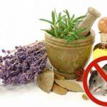 Olores que odian los ratones y ratas: repelentes naturales