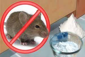 Cómo eliminar ratones con bicarbonato de sodio